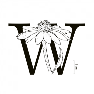 wildflower tea shop and apothecary
